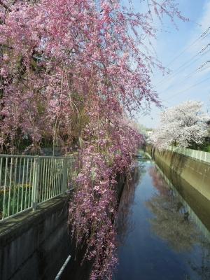 2014-04-02-touwa-01.jpg