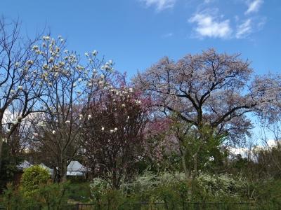2014-04-05-bloom-2.jpg
