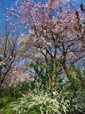 2014-04-05-bloom.jpg