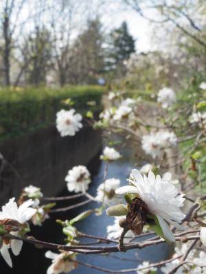 2014-04-05-magnolia.jpg