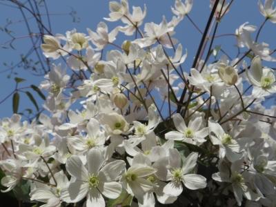 2014-04-10-white.jpg