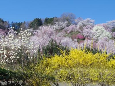 2014-04-14-hanamiyama-01.jpg