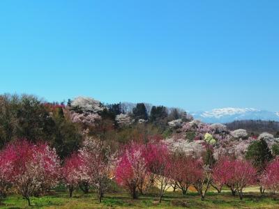 2014-04-14-hanamiyama-gokusai-02.jpg