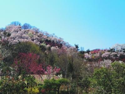 2014-04-14-hanamiyama-gokusai.jpg