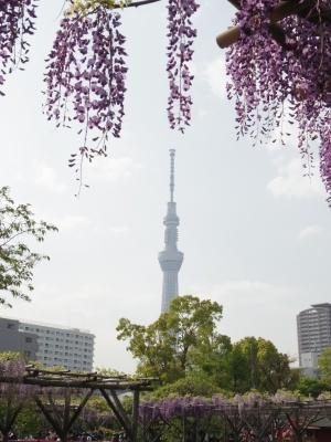 2014-04-23-fuji-03.jpg