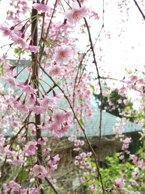 2014-04-28-rengebuji.jpg