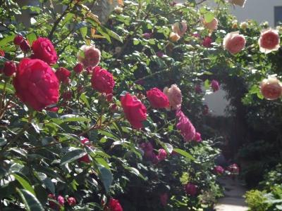 2014-05-09-rose.jpg