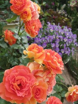 2014-05-14-orange.jpg