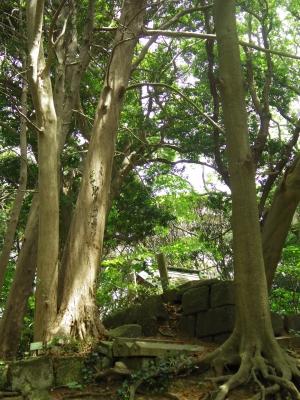 2014-05-19-kanou.jpg
