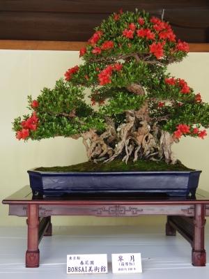 2014-06-09-bonsai01.jpg
