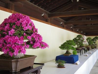 2014-06-09-bonsai02.jpg