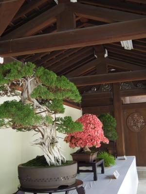 2014-06-09-bonsai03.jpg