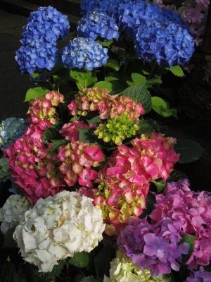 2014-06-09-hakusan-02.jpg