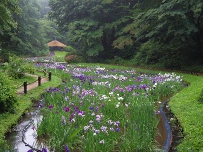 2014-06-12-hanashobu.jpg