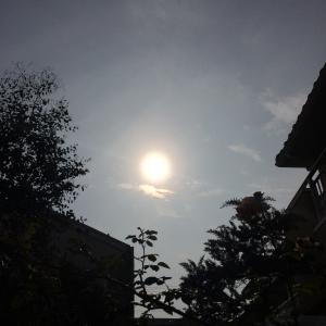2014-06-21-geshi.jpg
