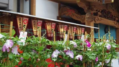 2014-07-07-asagao-01.jpg