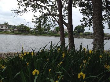 大塚池9(1)