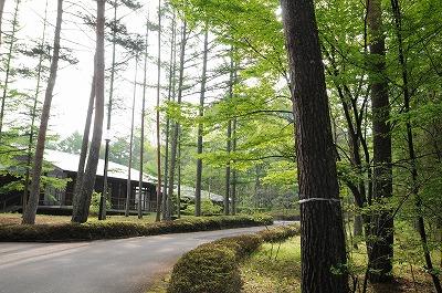 新緑の蓼科高原荘 (1)