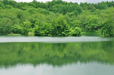 梅雨の竜神池 (1)