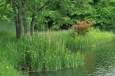 梅雨の竜神池 (2)