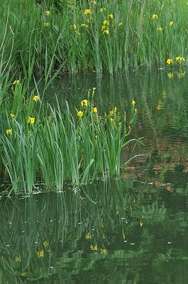 梅雨の竜神池 (3)