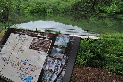 梅雨の竜神池 (4)