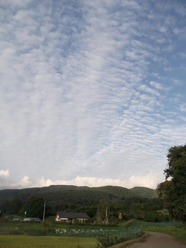 20140908うろこ雲 (15)