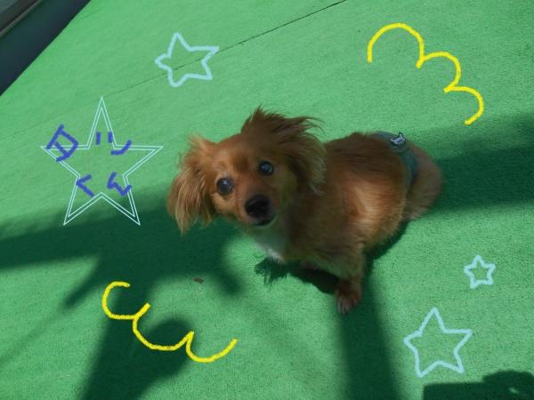 Andycafe Tatsu01_01
