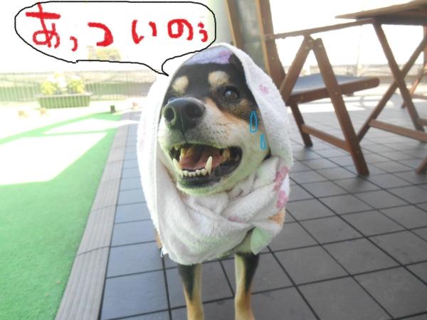 kai-kun 02_01
