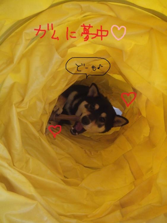 kai-kun 03_01