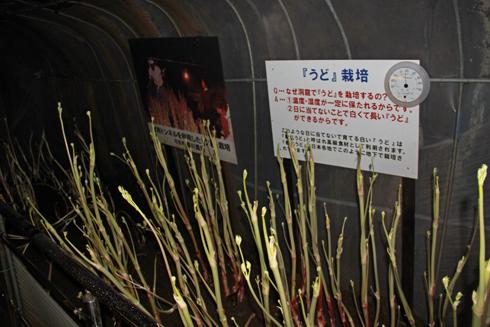 飛騨の大鍾乳洞-12