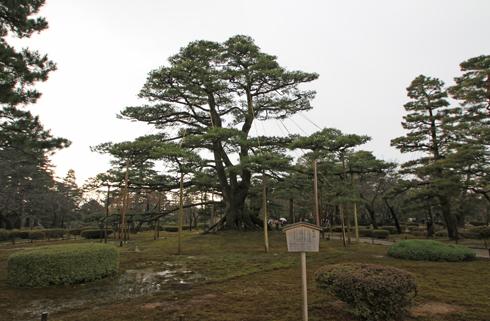 兼六園2013-5
