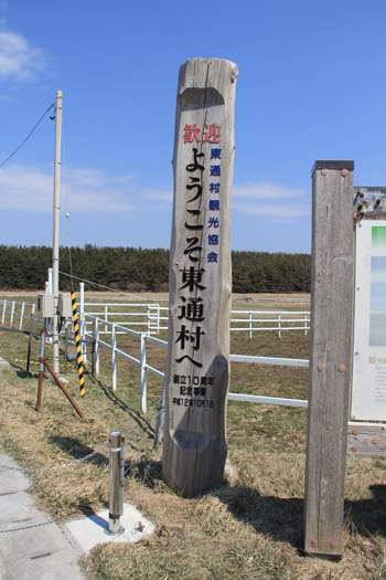 尻屋崎寒立馬2014春-1