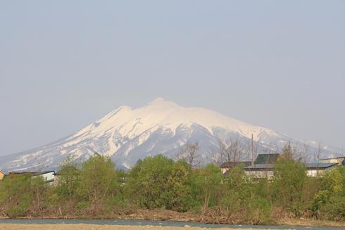 弘前桜祭り2014(1)-1
