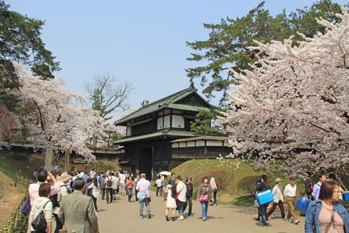弘前桜祭り2014(1)-2
