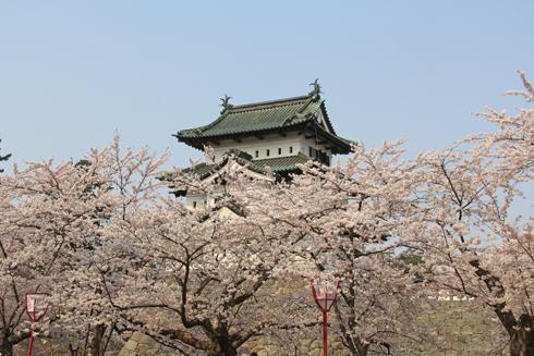 弘前桜祭り2014(1)-7