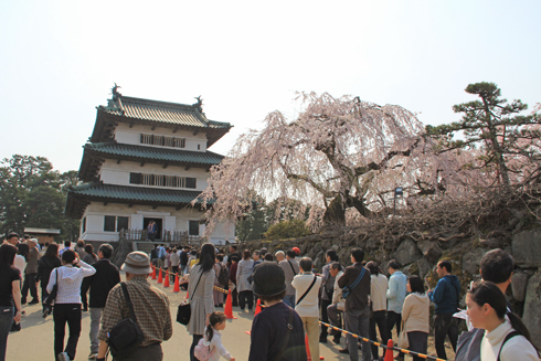 弘前桜祭り2014(1)-10