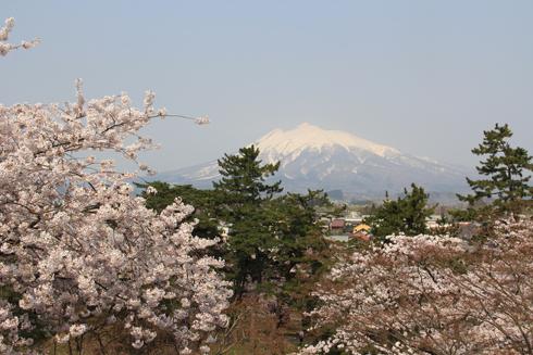 弘前桜祭り2014(1)-12