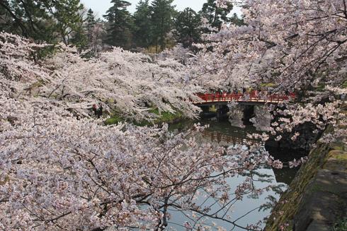 弘前桜祭り2014(1)-13