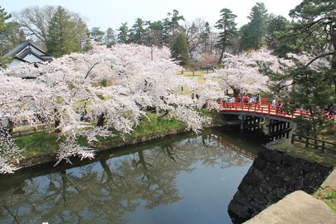 弘前桜祭り2014(1)-14
