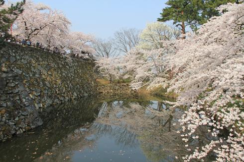 弘前桜祭り2014(1)-15