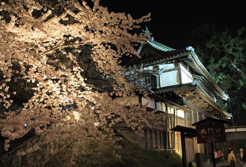 弘前夜桜2014-1