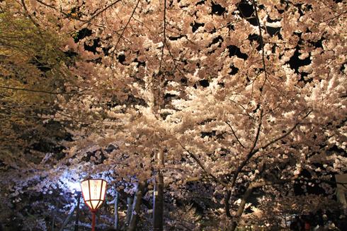 弘前夜桜2014-8
