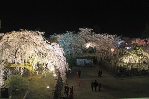 弘前夜桜2014-13