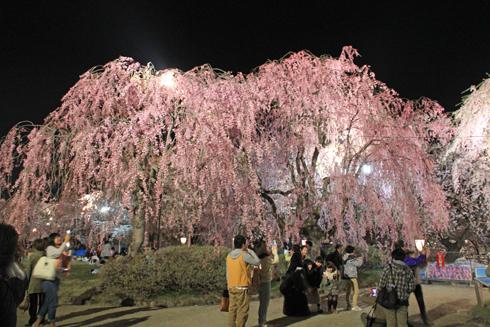 弘前夜桜2014-14