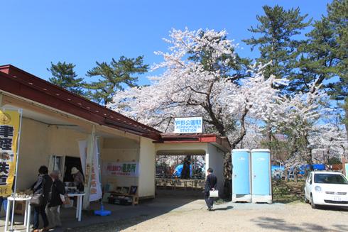 芦野公園桜祭り2014-1