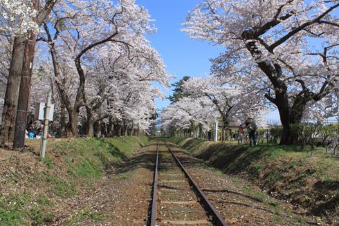 芦野公園桜祭り2014-2