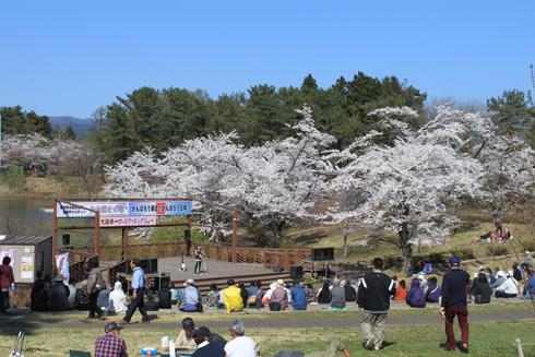 芦野公園桜祭り2014-3