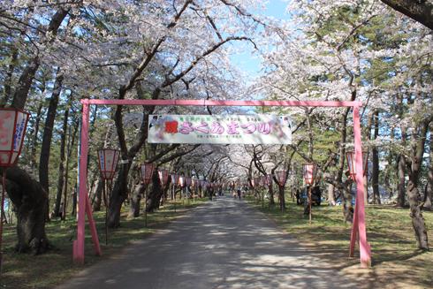 芦野公園桜祭り2014-4