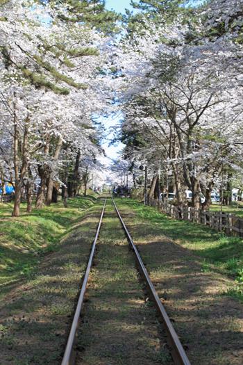 芦野公園桜祭り2014-8